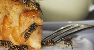 Allergie gegen Wespen - Vorsicht