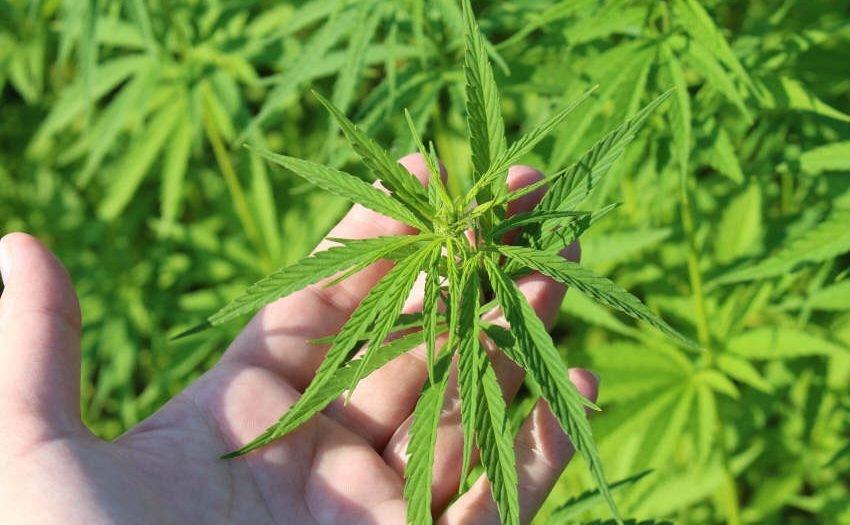 Cannabis Freigabe - ein politischer Irrweg